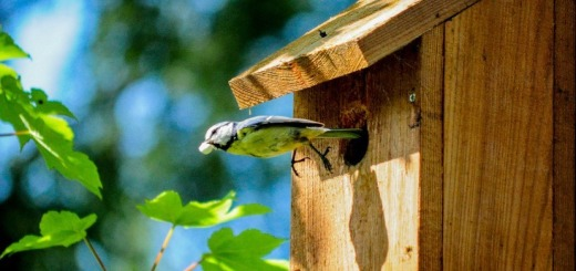 bird-bird-house-flight-854-828x550