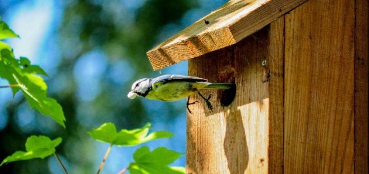 bird-bird-house-flight-854-828x550